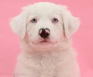 dog, pink, and pets image