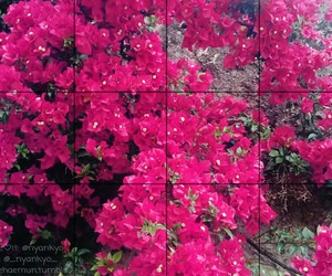 color, flower, and magenta image