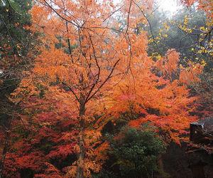 autumn, foliage, and landscape image