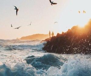 beautiful, birds, and breeze image