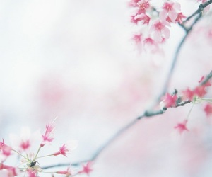 background, flowers, and picture image