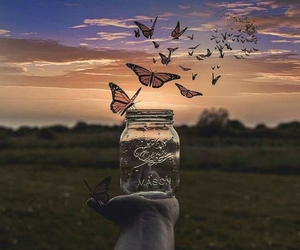 butterflies, dreaming, and free image