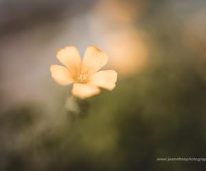 charlotte nc, nature, and macro photo image
