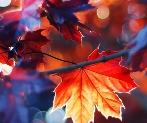 fall, leave, and nature image