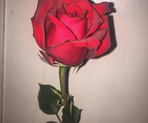 pretty, rose, and red image