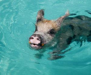 animals, bahamas, and beach image