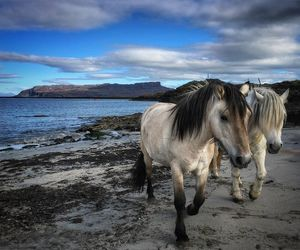 bbc, horses, and photography image