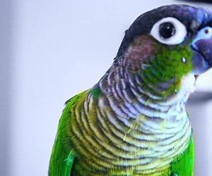 animals, edit, and green image