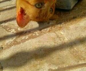 animal, eyes, and kitten image