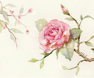 flowers, rose, and illustration image