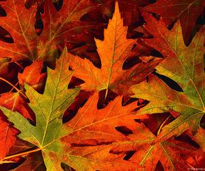 autumn, orange, and love image