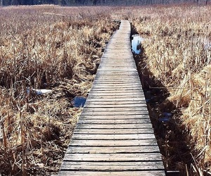 adventure, boardwalk, and fall image