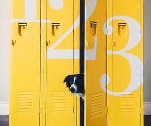 dog and yellow image