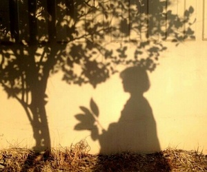 shadow, aesthetic, and tree image