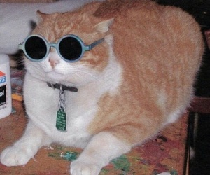 cat, article, and funny image