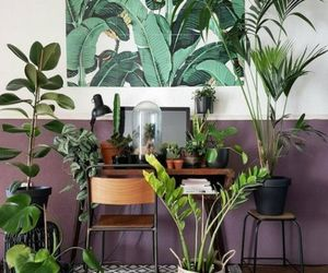art, house plant, and inspiration image