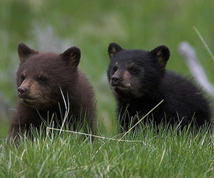 bear, cute, and animals image