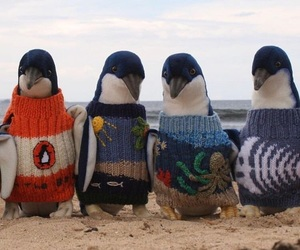 penguin, cute, and sweater image
