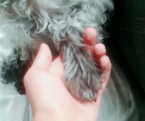 dog, best friend forever, and fri endship image