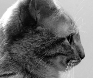 balck and white and cat image