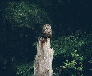 bird, calmness, and Darkness image