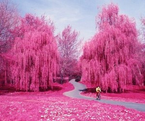 nature, beauty, and pink image