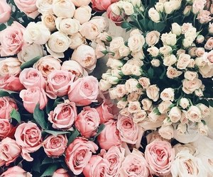 flowers, roses, and floral image