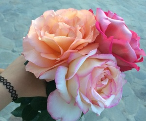 flowers, rose, and ًًًًًًًًًًًًً image