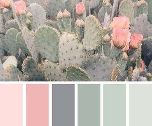 pink, cactus, and green image