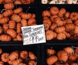 pumpkin, autumn, and fall image