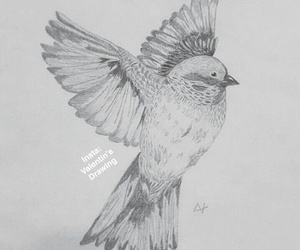 bird, drawing, and dessin image
