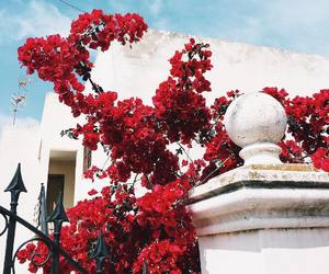 architecture, flowers, and tree image