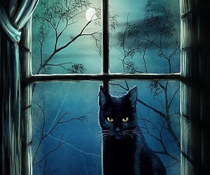 cat, night, and black image