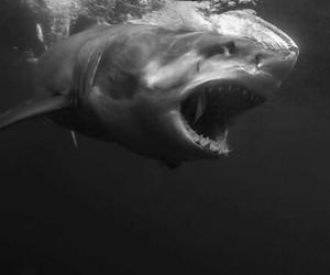 black, blue sea, and shark image
