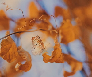 butterfly, autumn, and fall image