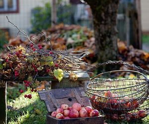 autumn, country living, and apple-picking image