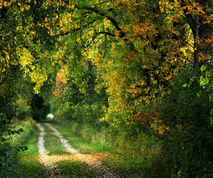 autumn, dirt road, and rural image