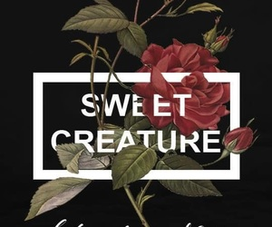 Harry Styles, wallpaper, and sweet creature image