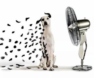 dog, art, and dalmatian image