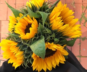 autumn, sunflower, and yellow image