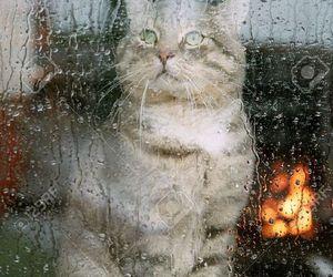 autumn, cat, and rain image