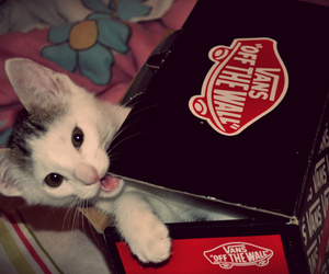 amazing, cat, and vans image
