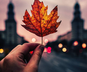 autumn, city, and hand image