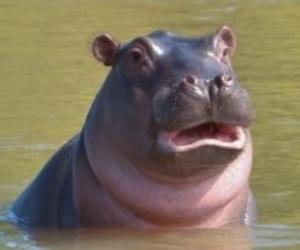 goofy, hippo, and tiny ears! image