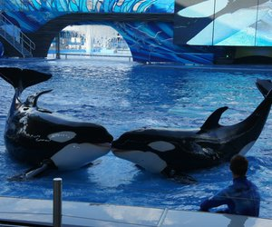 animals, whale, and whale love image