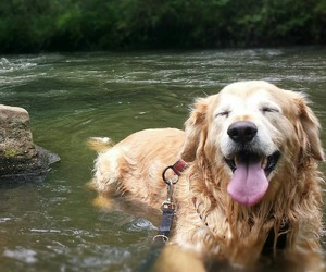 dog and water image