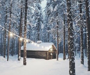 cold, forest, and house image