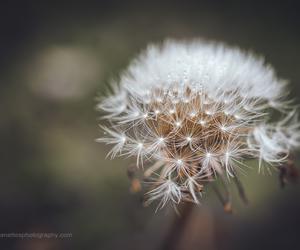 charlotte nc, fine art photography, and macro image