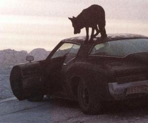 car, dog, and wolf image