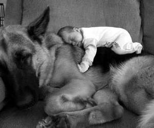 adorable, german shepard, and friends image